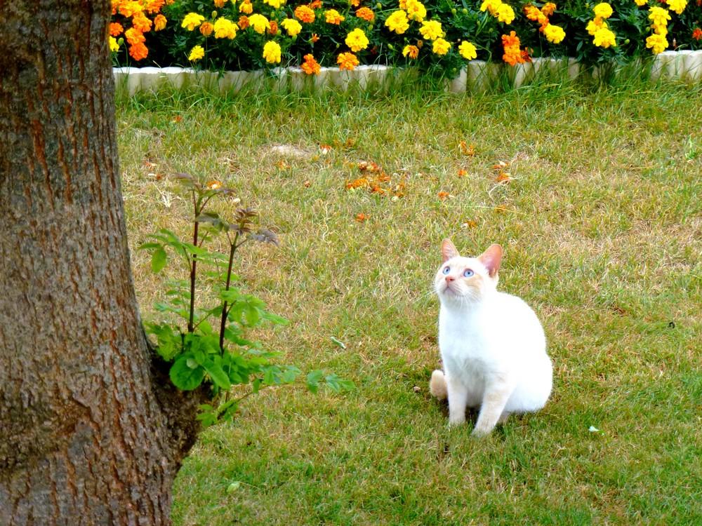 Désormais, ARAMIS sort seul dehors, sans laisse, sauf à l'extérieur de la propriété...