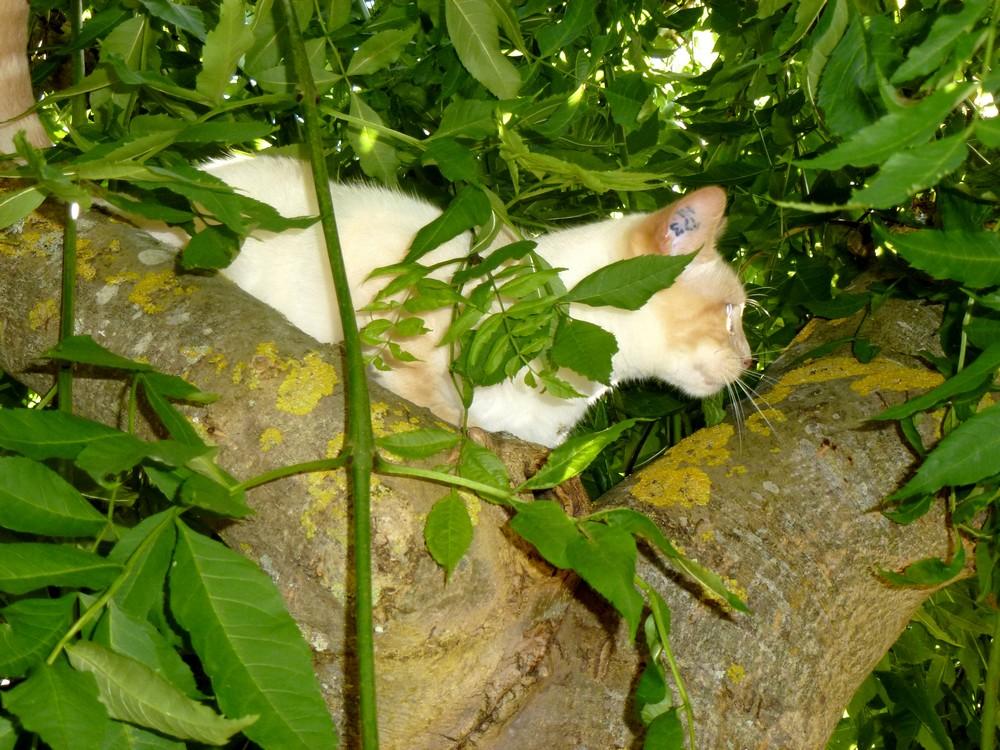 ARAMIS dans l'arbre ... Ça le démangeait !