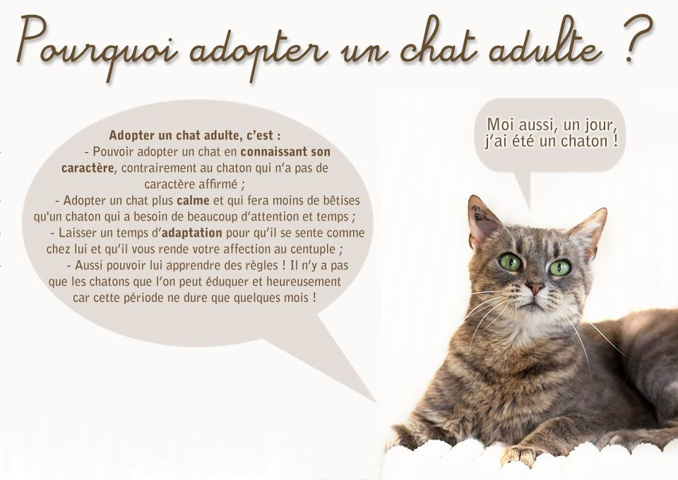 Adopter un chat virtuel gratuitement