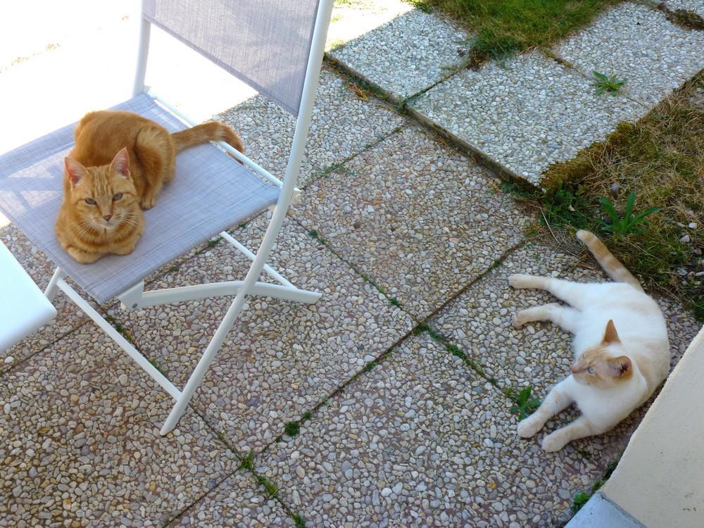 Aramis dehors, sans laisse, avec Milady, devant table et chaises de jardin, en attente de nourriture.