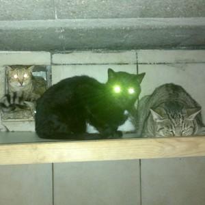 Les chats libres