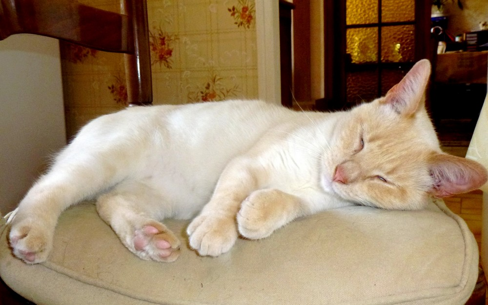 Trop las d'attendre à manger, ARAMIS fait une micro-sieste !
