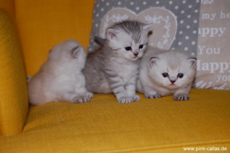 Geena, Gustav, Gretel