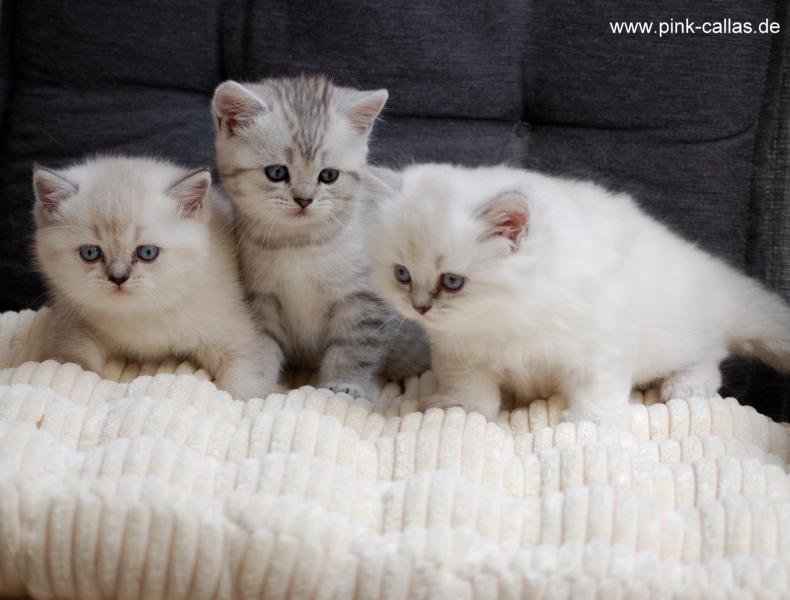 Gretel, Gustav, Geena (v.rechts)