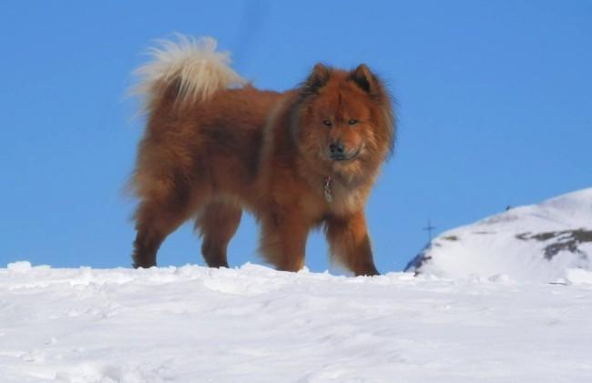 """Avito, der """"König der Berge""""  mit 3 Jahren"""