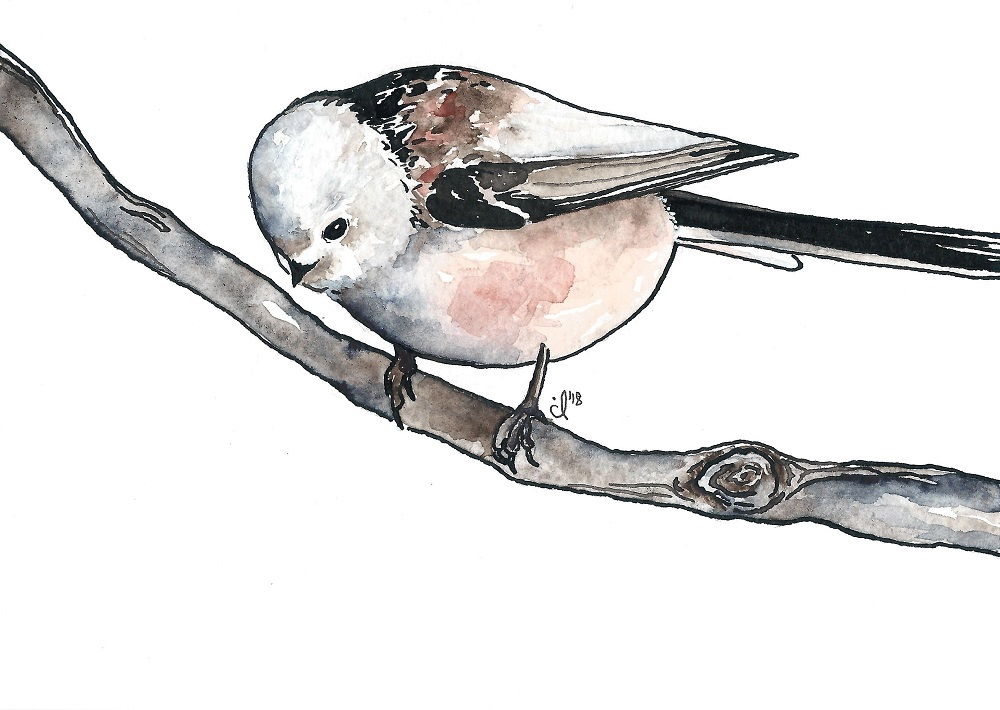 #9 Long Tailed Tit