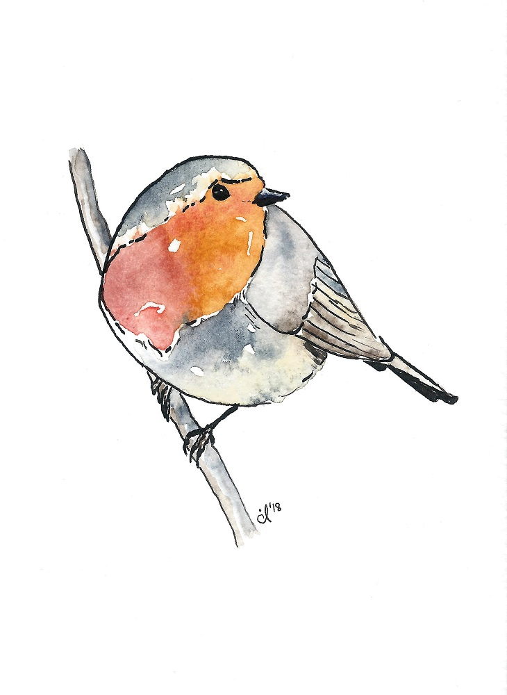 #1 European Robin
