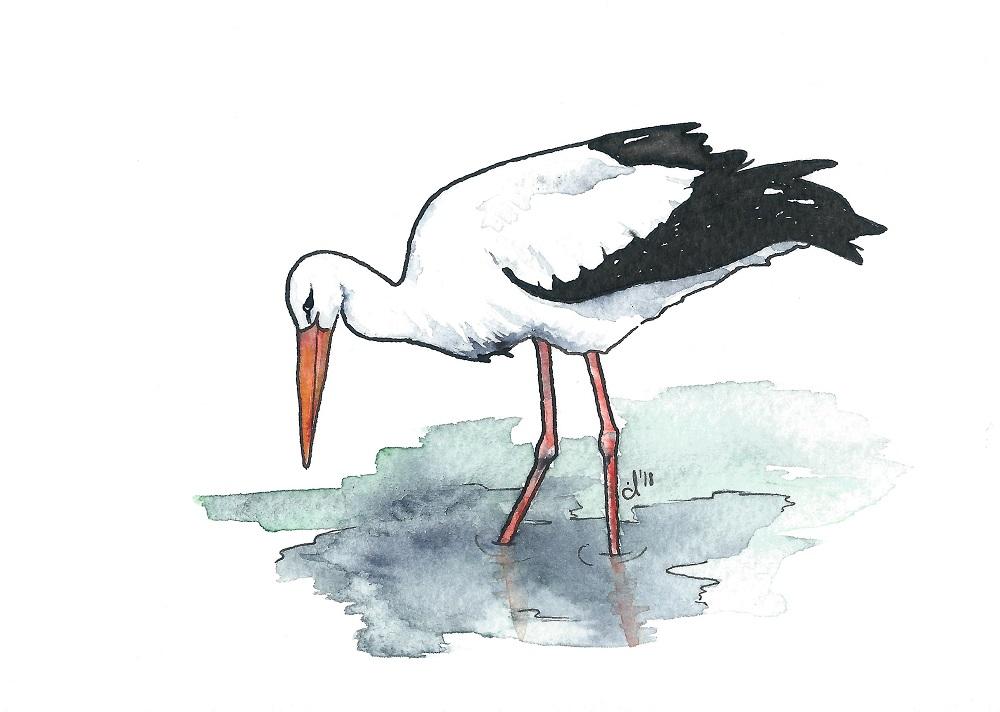 #12 White Stork