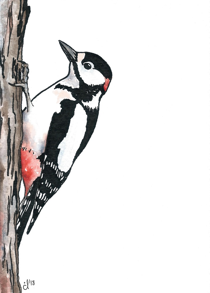 #7 Great Spotted Woodpecker