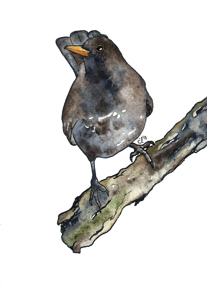 #10 Blackbird