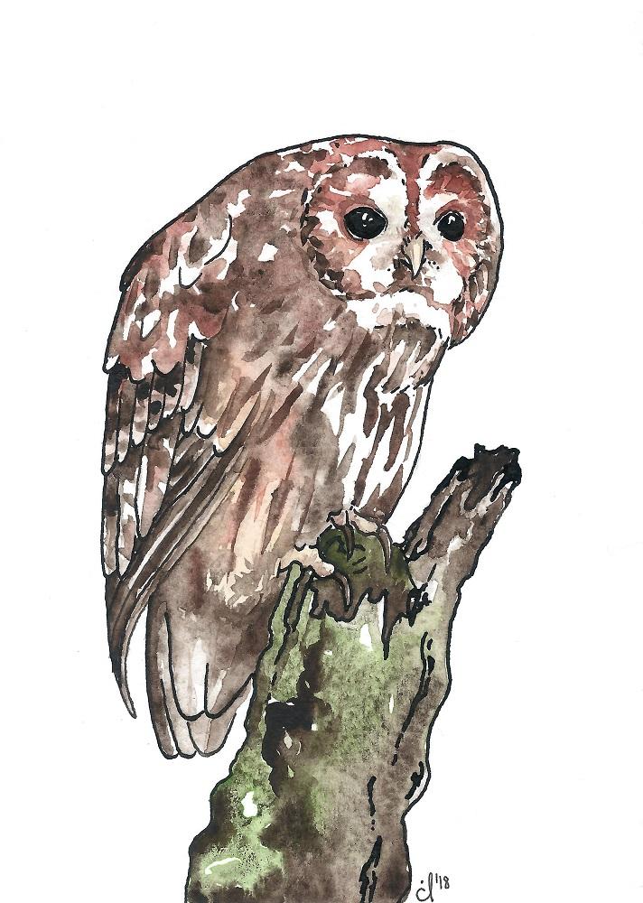 #11 Tawny Owl