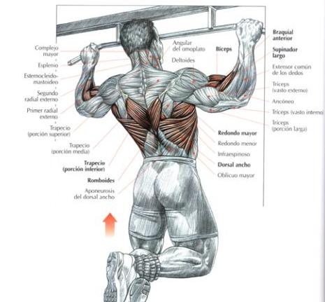 ejercicios para pectorales con barra