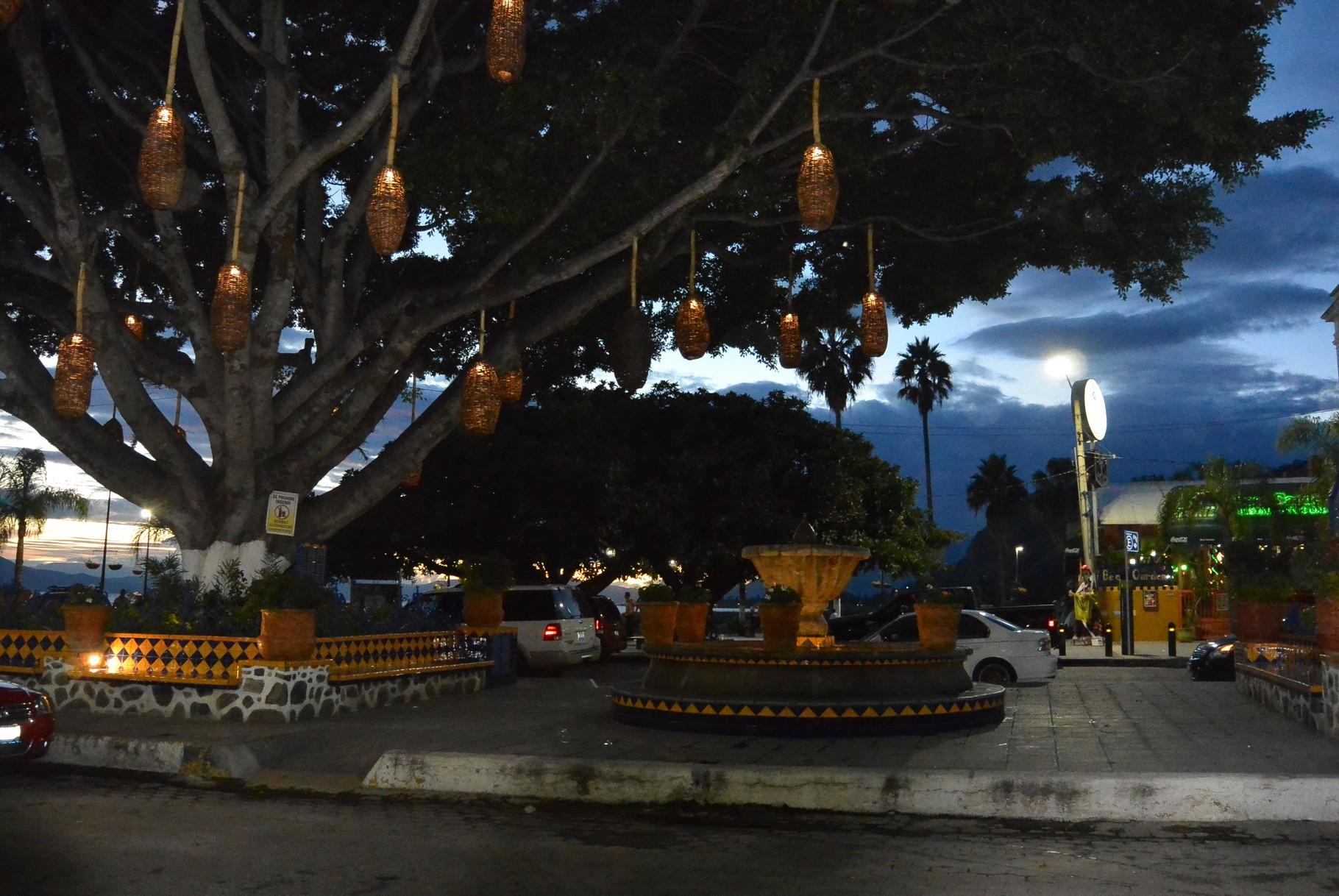 Eclairage original des arbres
