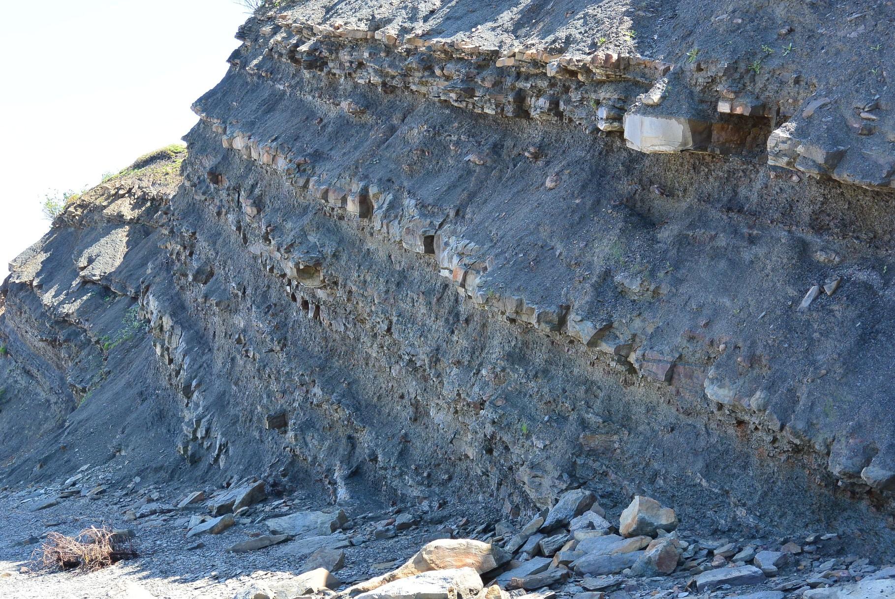 falaise fossilifère