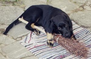 Hundekind Momo