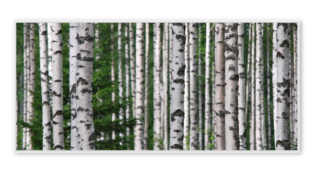 Birken-Lehtinen-0969-01 Finland