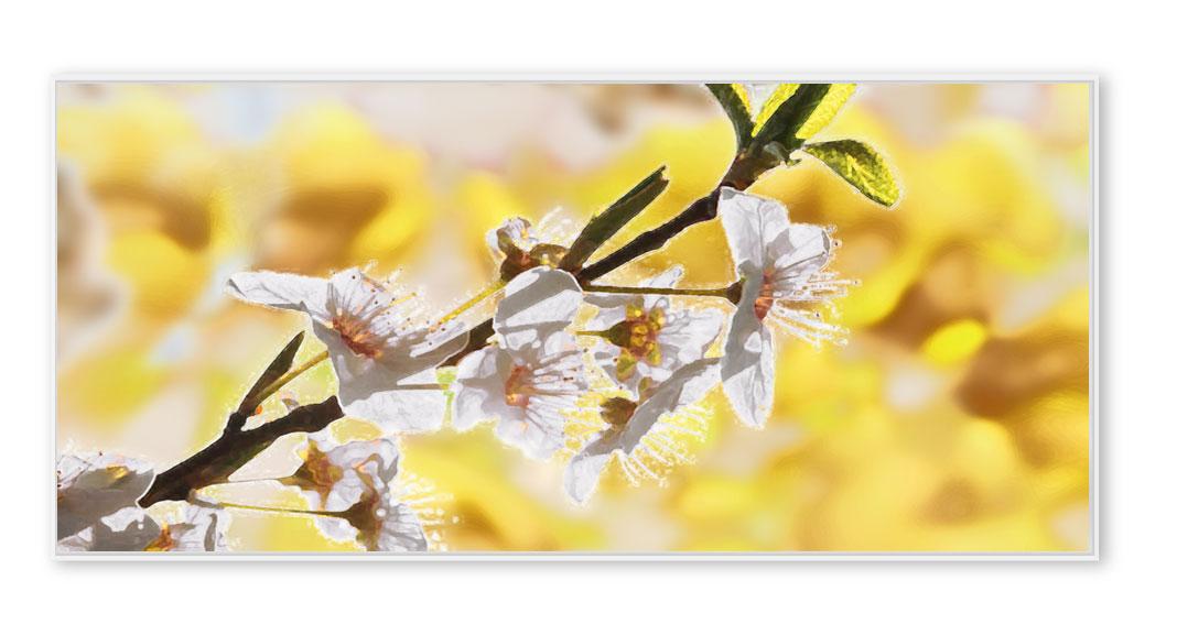 Kirschblüten-06-gelb