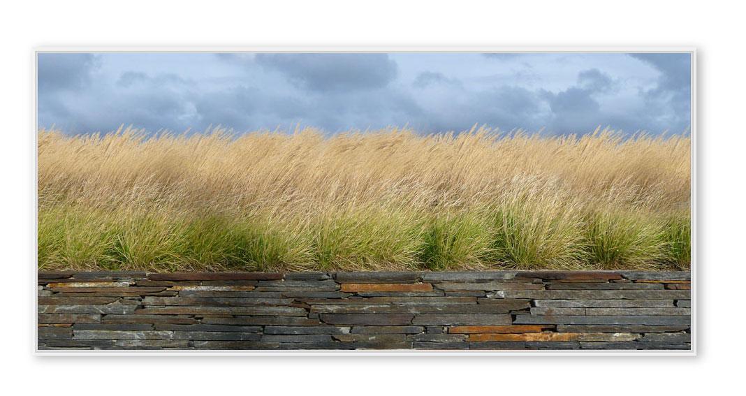 Gras-Dänemark-001