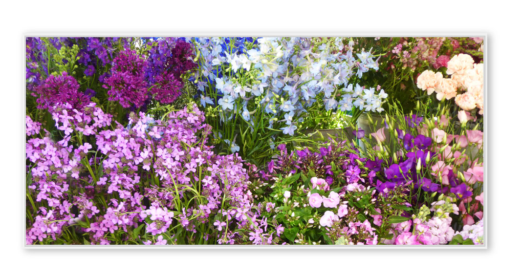 Blumenmarkt-002-P1220476