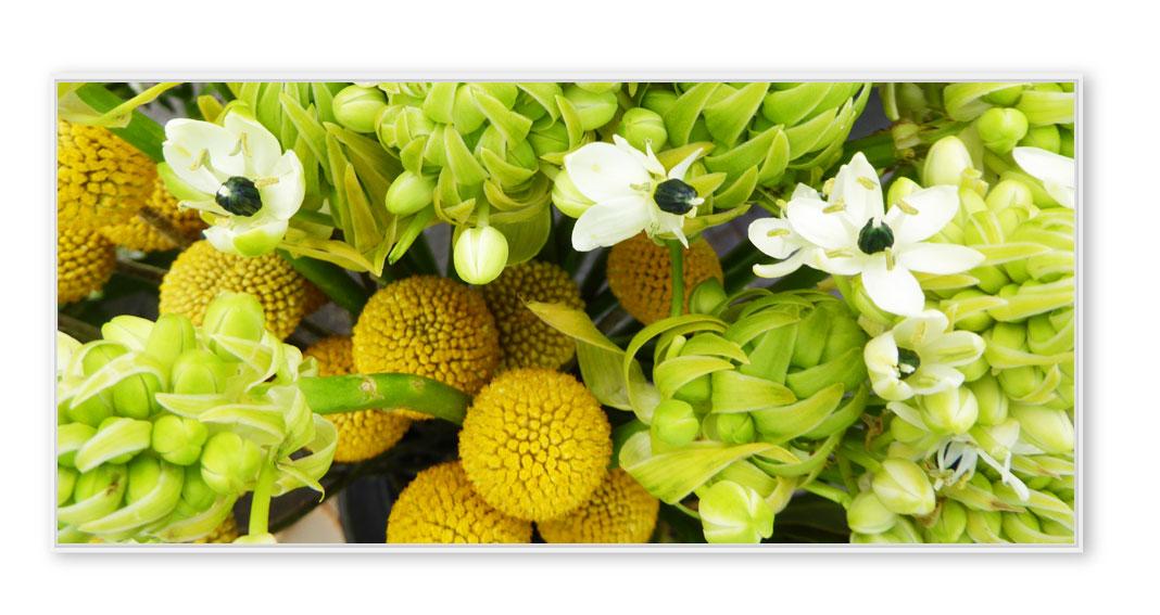 Blumenmarkt-003-P1220454