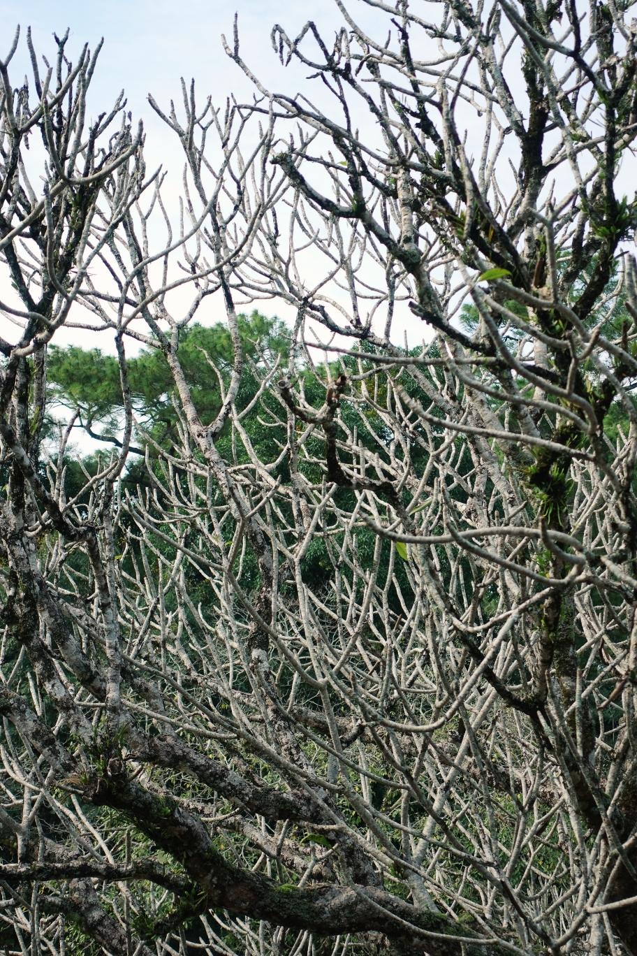 Witzige Bäume