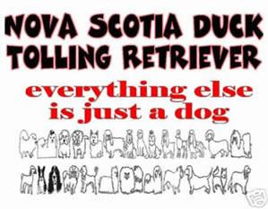 Nova Scotia Duck Tolling Retriever, was sonst?