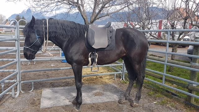 PRE Rey mit einem Dressage Andaluz mit halbtiefem Sitz