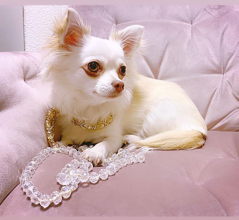 2. Platz - Dalia of Glamour