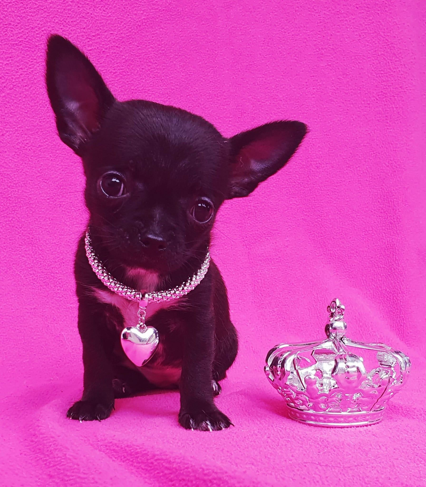 1. Platz Yuna of Glamour