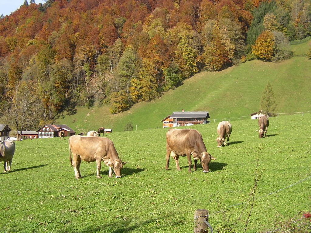Mit dem Bauernhof wird naturnahe Kreislaufwirtschaft betrieben.