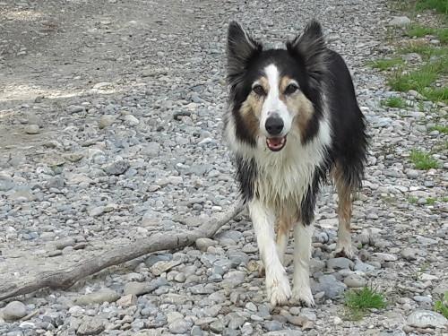 Erste Hilfe Kurse für alle Hundehalter