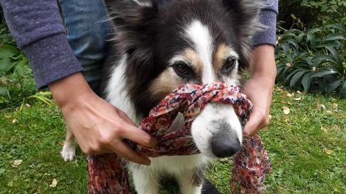 Handling und Sichern von verletzten Hunden