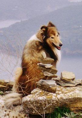 Seminar Kastration beim Hund