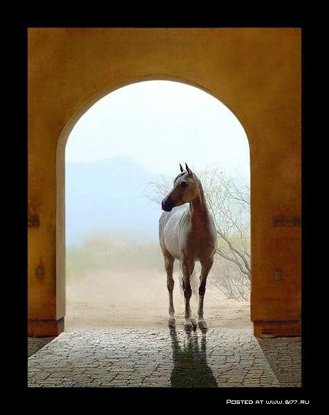 лошадь, легенда, арабская