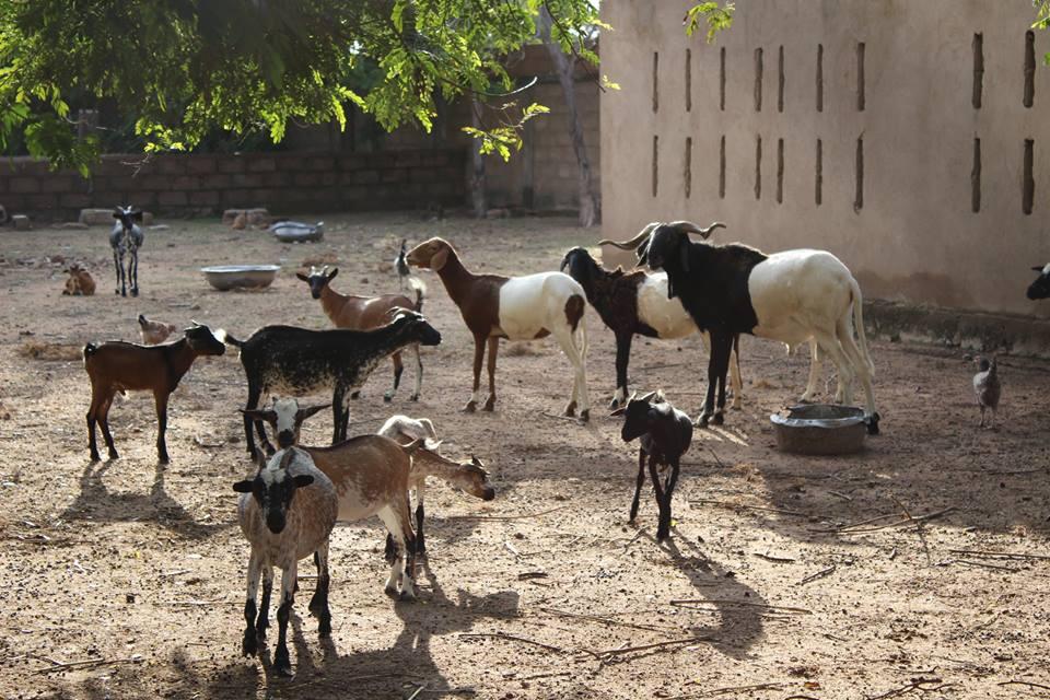 Zentrum für Kinder in Not LSI: die Viehzucht