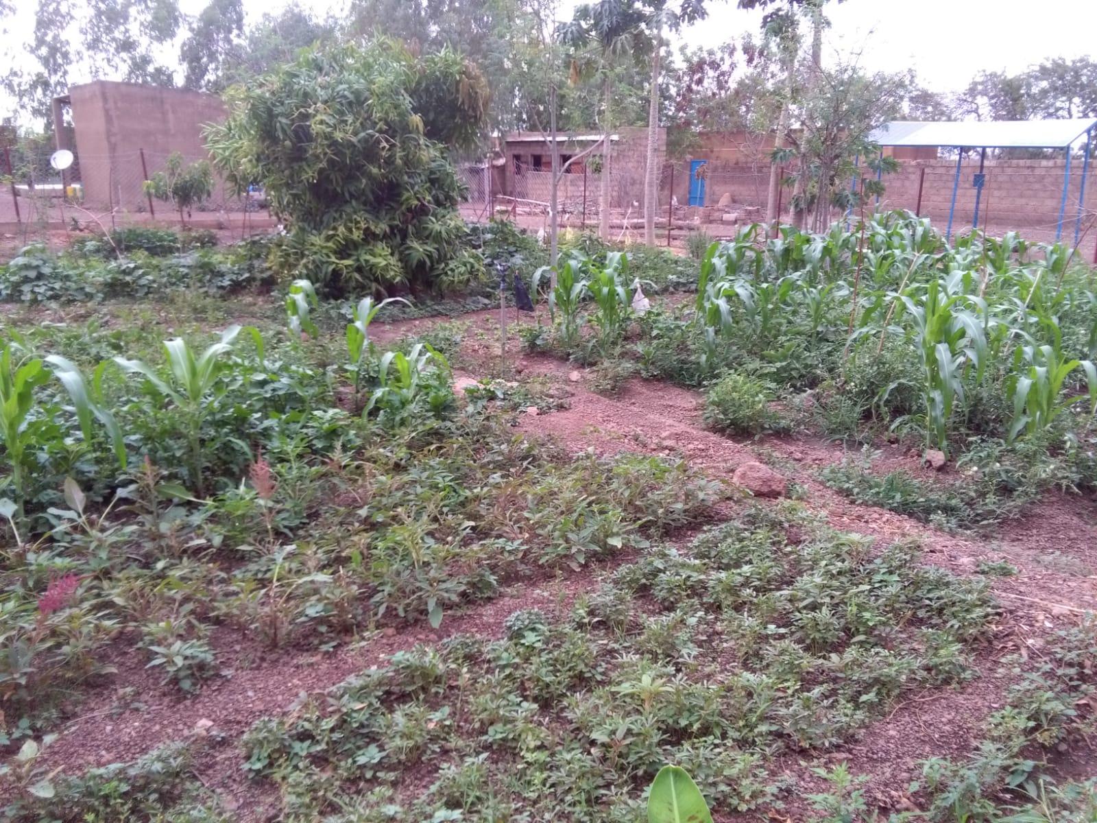 Diverse Früchte sowie Tomaten, Salat, Gurken, Zucchini, Mais, Bohnen und diverse Blätter für traditionelle Saucen finden sich im Garten.