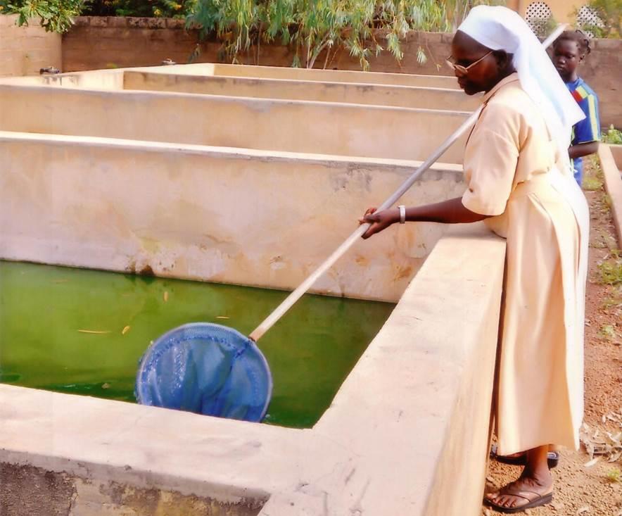Mit einem eigenen Brunnen kann das Wasser künftig öfter gewechselt und somit die Produktivität der Fischzucht erhöht werden.