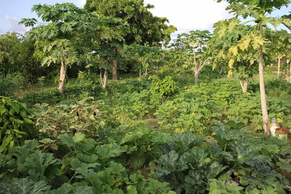 Im Garten von LSI: Viele verschiedene Gemüse- und Früchtesorten werden angebaut.