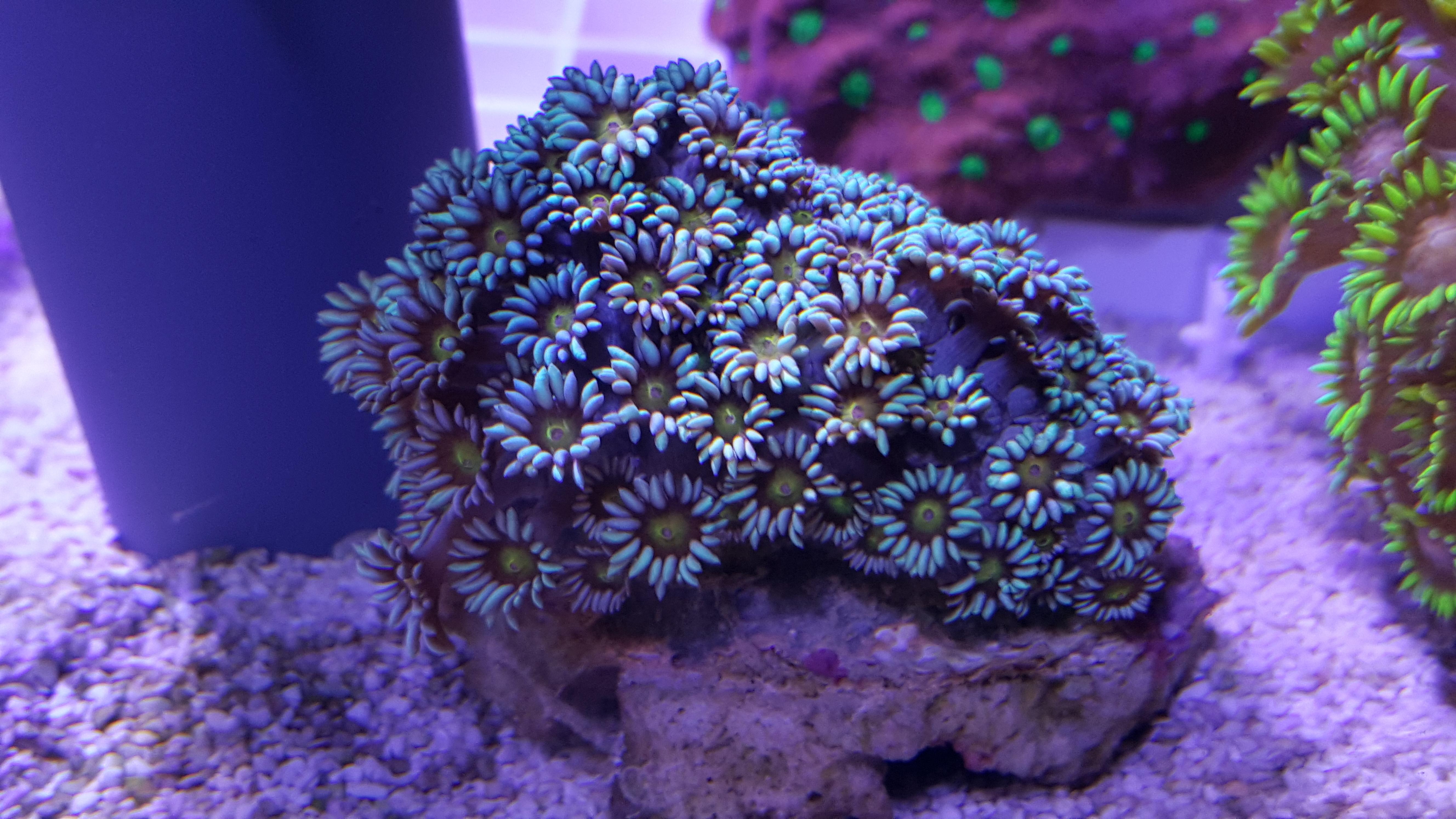 Tropic marin meerwasser aquaristik bods webseite for Meerwasser aquaristik shop