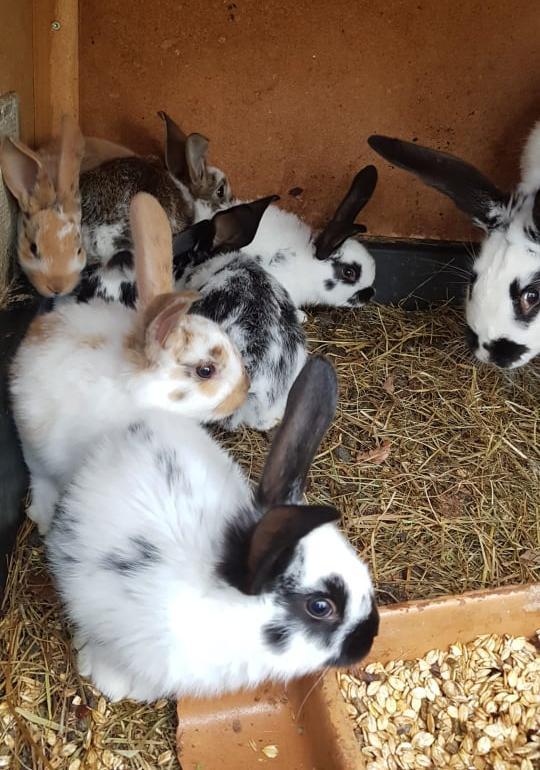8 junge Hasen