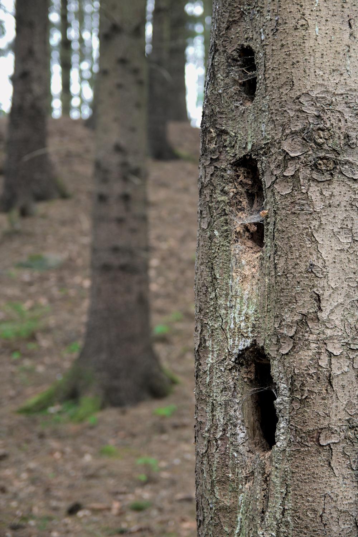 Großer Tumulus im Pöglitzer Forst