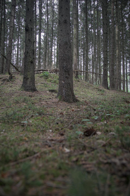 Der kleine Tumulus im Pöglitzer Forst