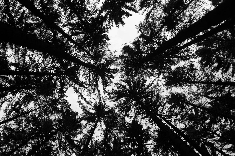 Blätterdach beim großen Tumulus