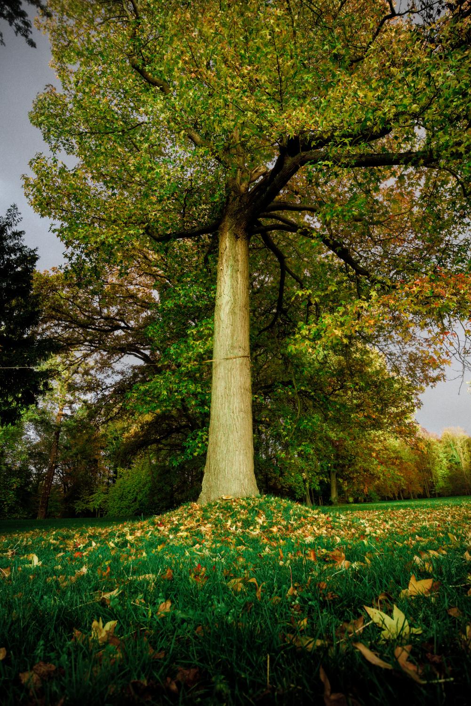 Herbst im Schlosspark Pansevitz.