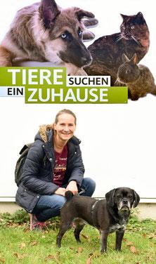 Pechpfoten bei Tiere suchen ein Zuhause (WDR)