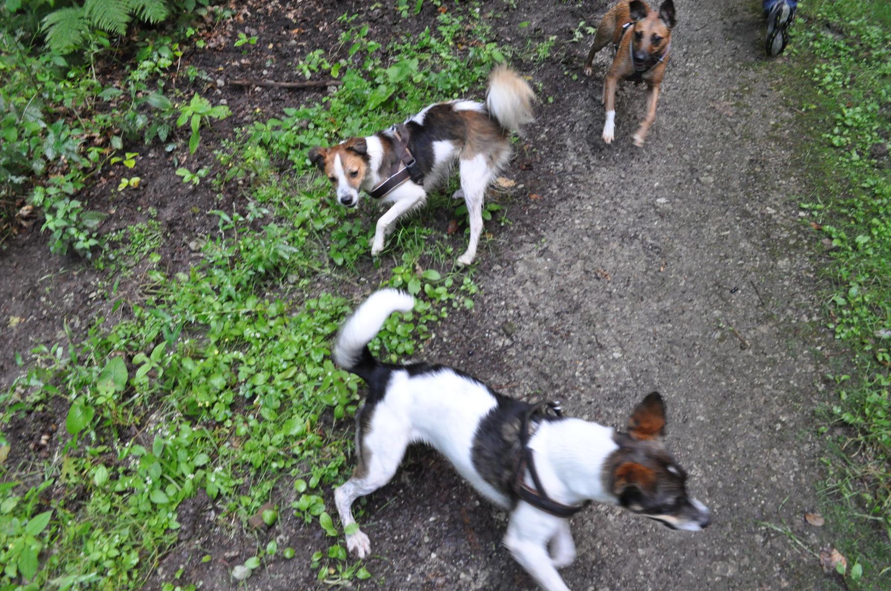 Asha, Bijou & Abby