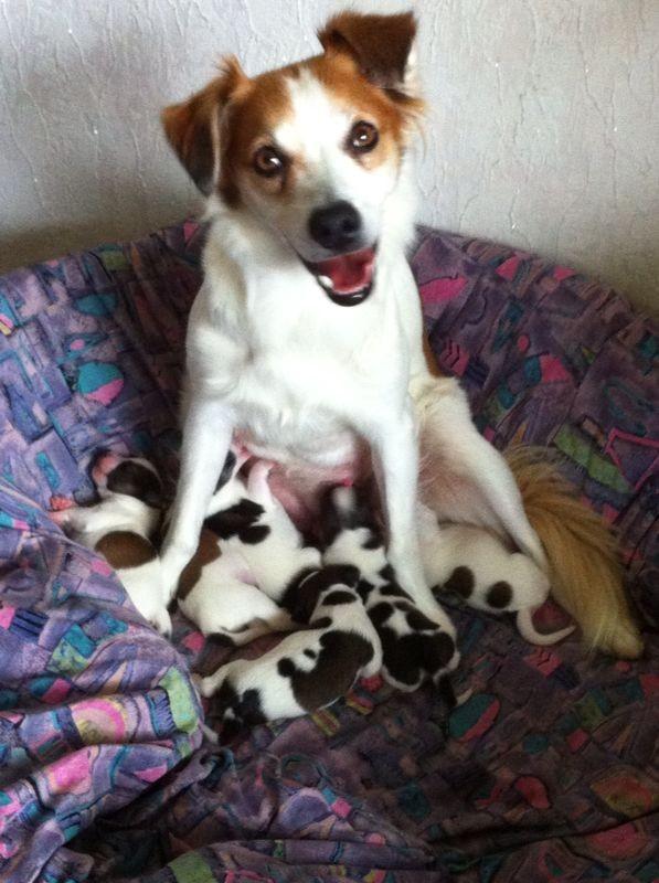 Eine glückliche Mama mit ihren Baby's