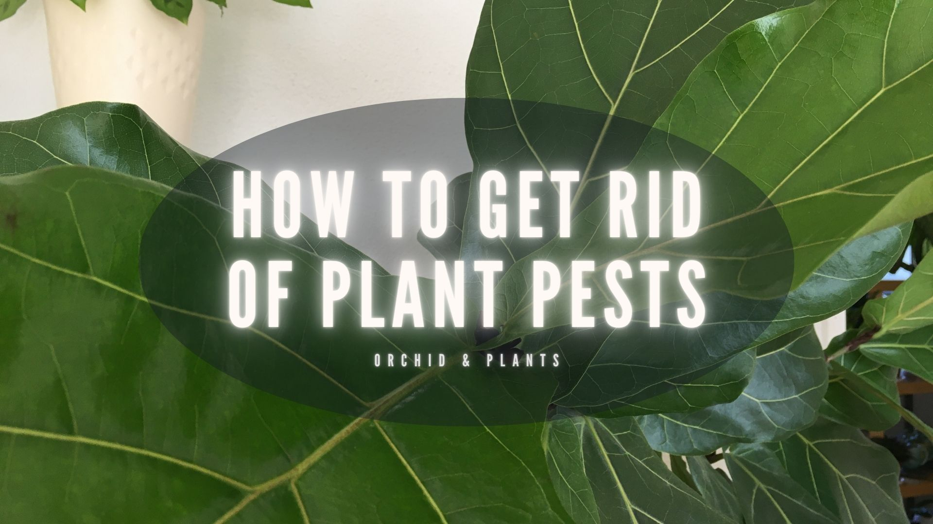 HOW TO GET RID OF PLANT PESTS