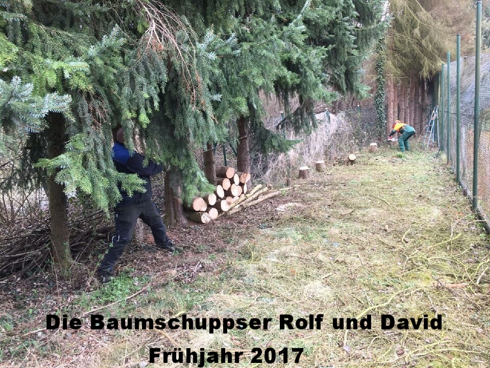 Die Baumschuppser Rolf und David 2017 in Action