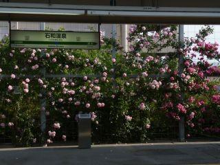 15:58 石和温泉駅はバラの花で埋まっていました